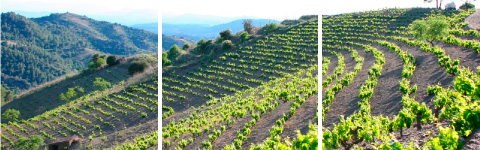 3-Priorat_vineyard